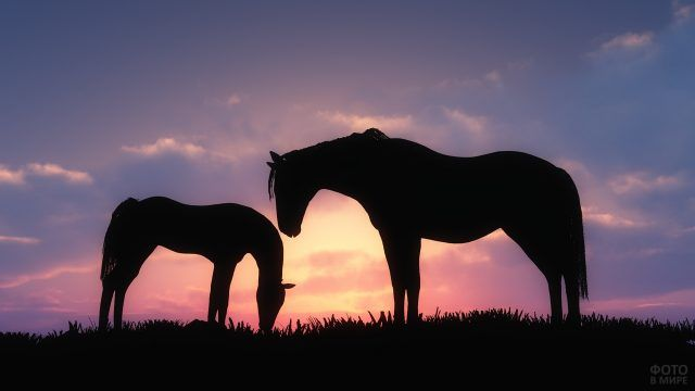 Лошадь с жеребёнком на закате