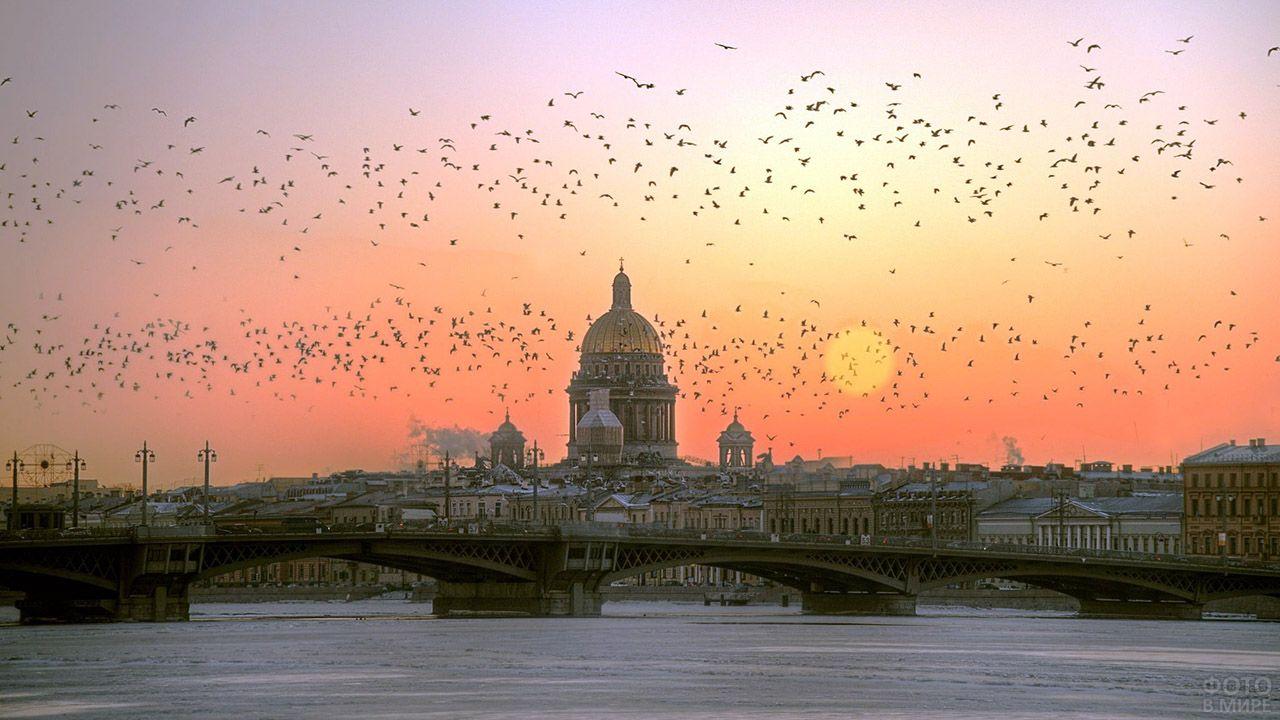 Птицы на фоне заката над Петербургом