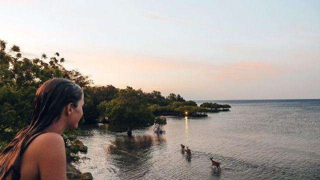 Девушка смотрит на оленей у мелководья парка Бали Барат на закате солнца