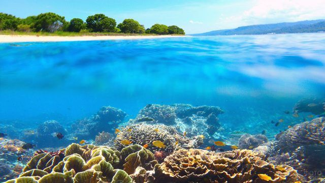 Подводный мир национального парка Бали Барат