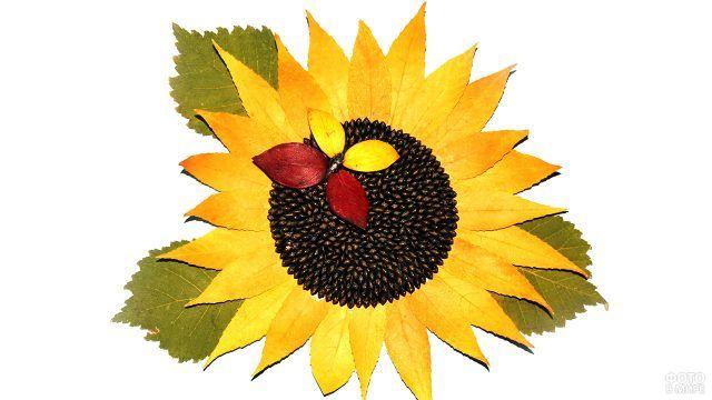 Аппликация Подсолнух из семечек и жёлтых листьев