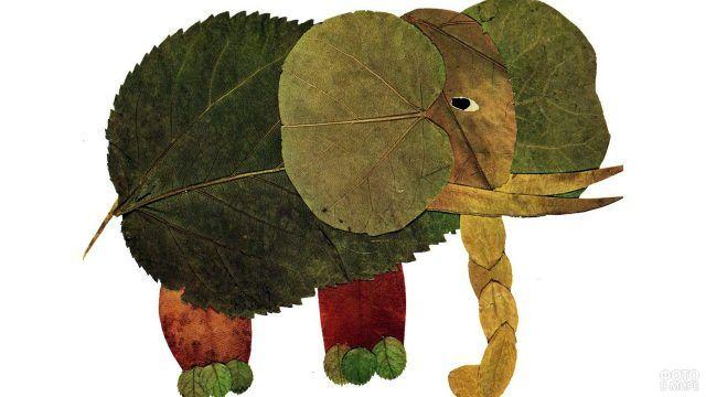 Аппликация Слон из разноцветных осенних листьев