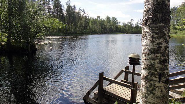 Берёза у пирса на берегу озера в Финляндии