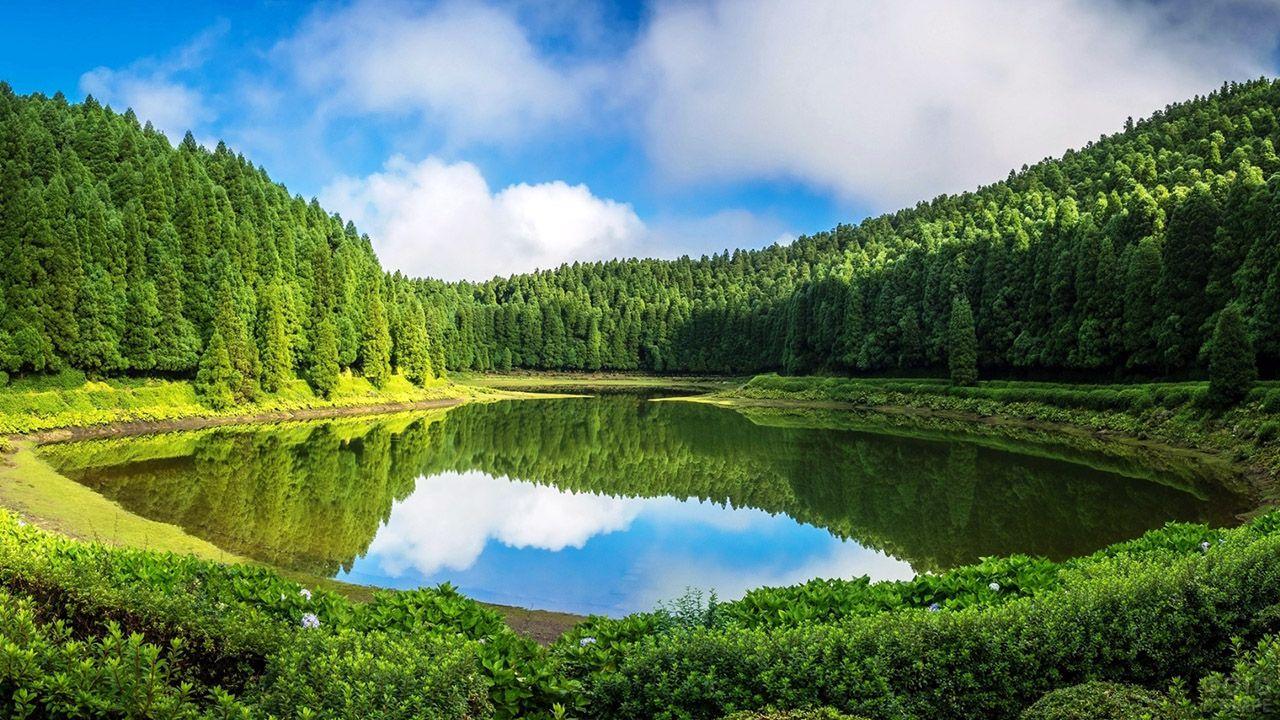 Чаша озера в изумрудном лесу под летним небом