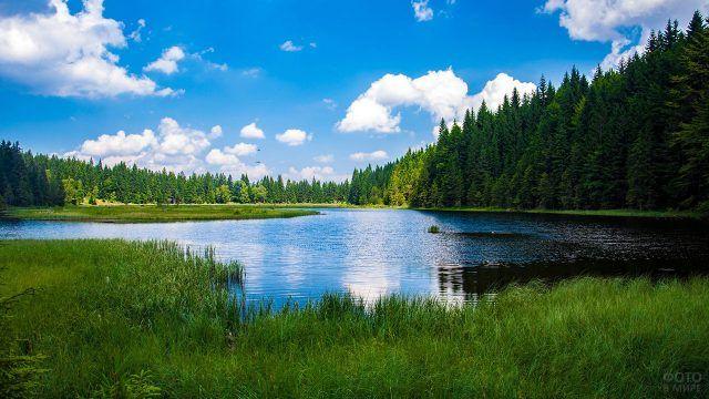 Хвойный лес на зелёных берегах синего озера
