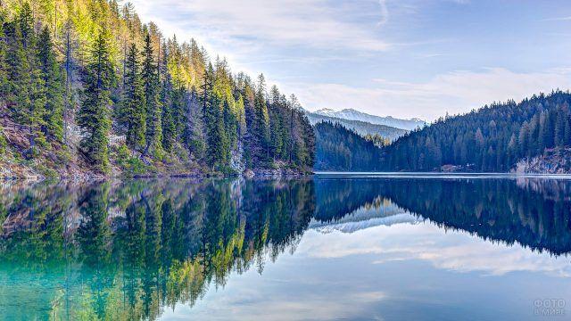 Отвесный берег озера с высокими елями на фоне снежных горных вершин