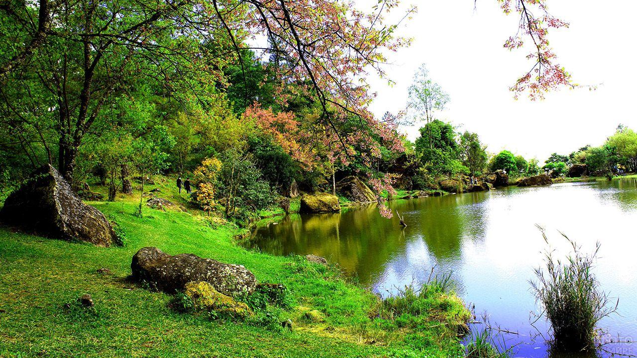 Ветки осенних деревьев склоняются над озером в парке