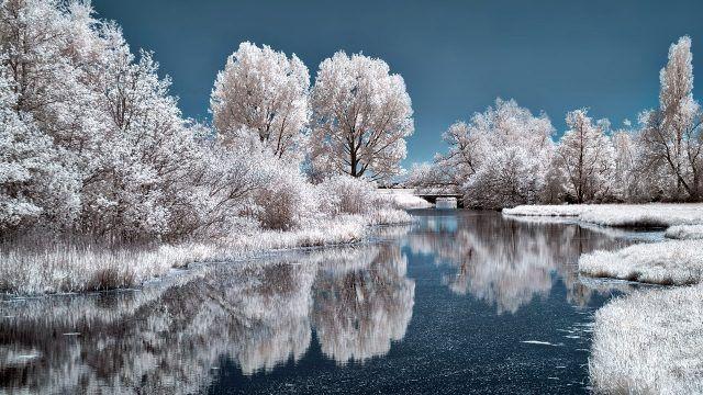 Заснеженные берега и деревья у лесного озера