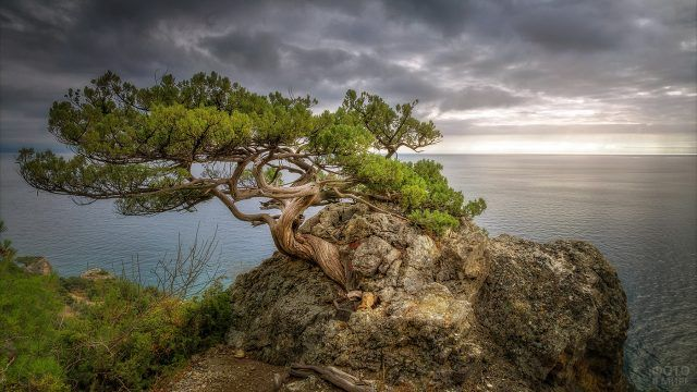 Морской пейзаж с сосной на фоне грозового неба