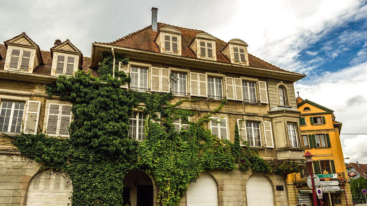 Увитый плющом фасад старинного городского дома