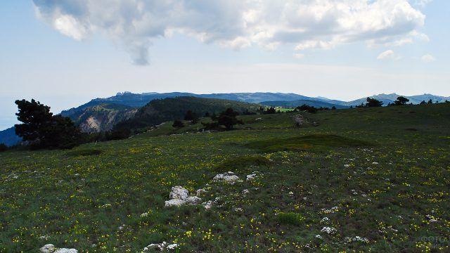 Цветущее Ай-Петринское плато в Крыму