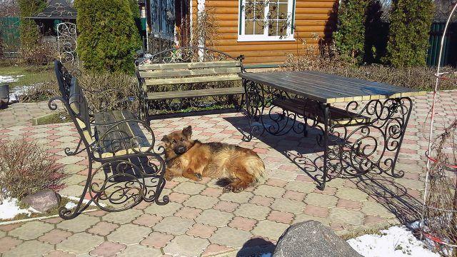 Собака лежит во дворе дома с кованой мебелью