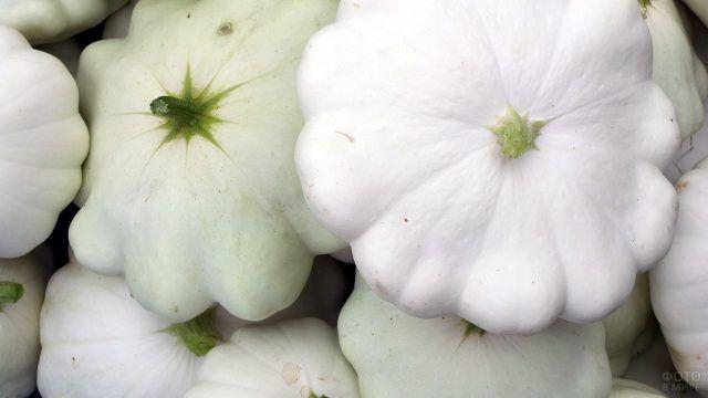 Белые патиссоны с грядки
