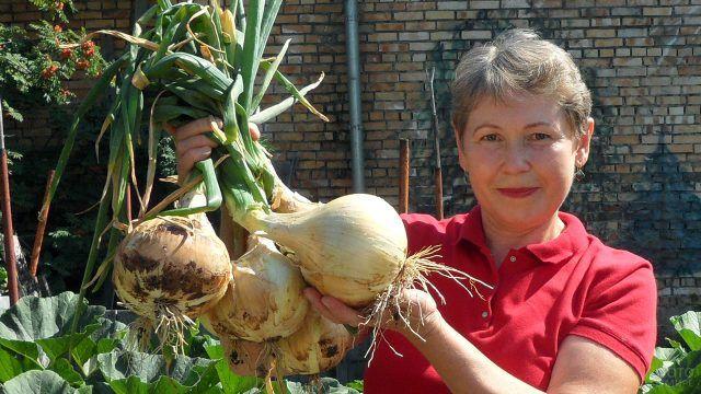 Дачница из Хакасии хвастается урожаем лука