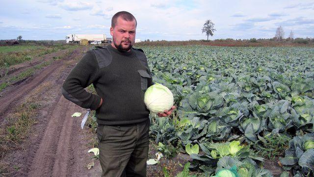 Мужчина с качаном капусты в осеннем поле