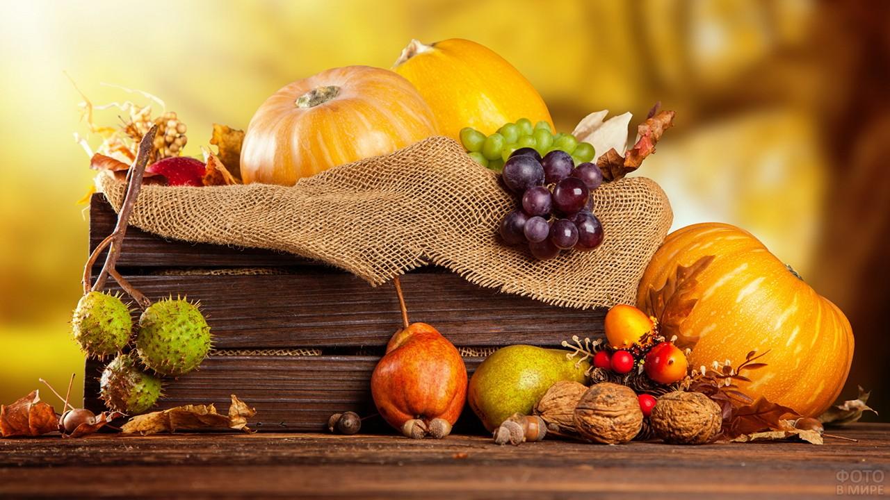 Овощи осенью (48 фото)