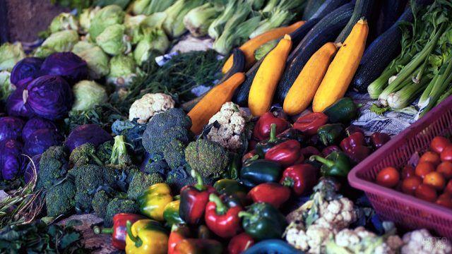 Обильный урожай разноцветных осенних овощей