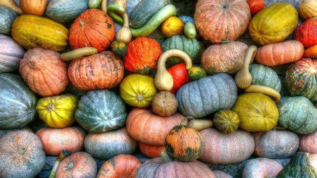 Плотно уложенные разноцветные тыквы