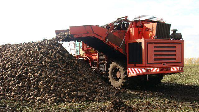 Уборка сахарной свеклы в промышленных масштабах