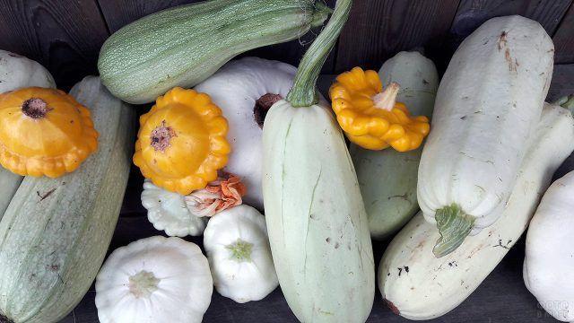Урожай патиссонов и кабачков
