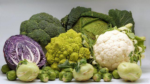 Урожай самых разных сортов капусты кроме белокачанной