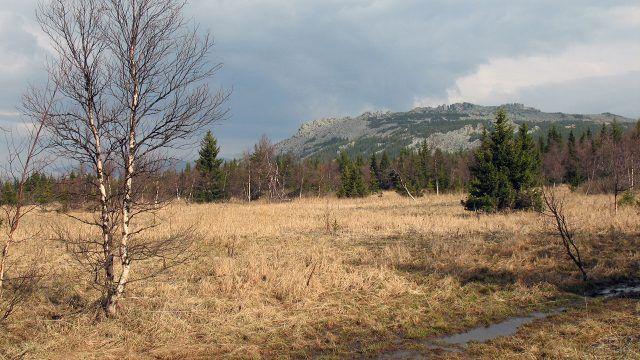 Берёза в поле на фоне горы Сукташ на Северном Урале