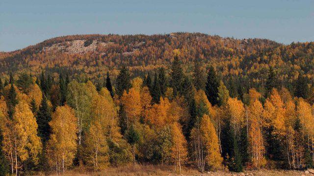Южная вершина Малого Таганая на Южном Урале
