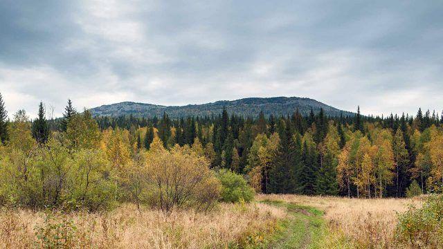 Осенний лес в предгорье Таганая