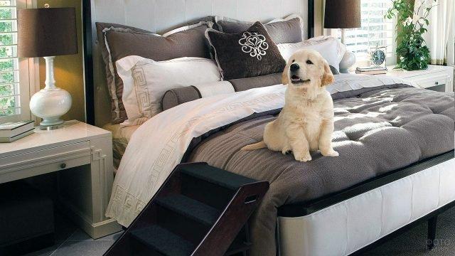 Щенок на кровати в кофейно-белом интерьере классической спальни