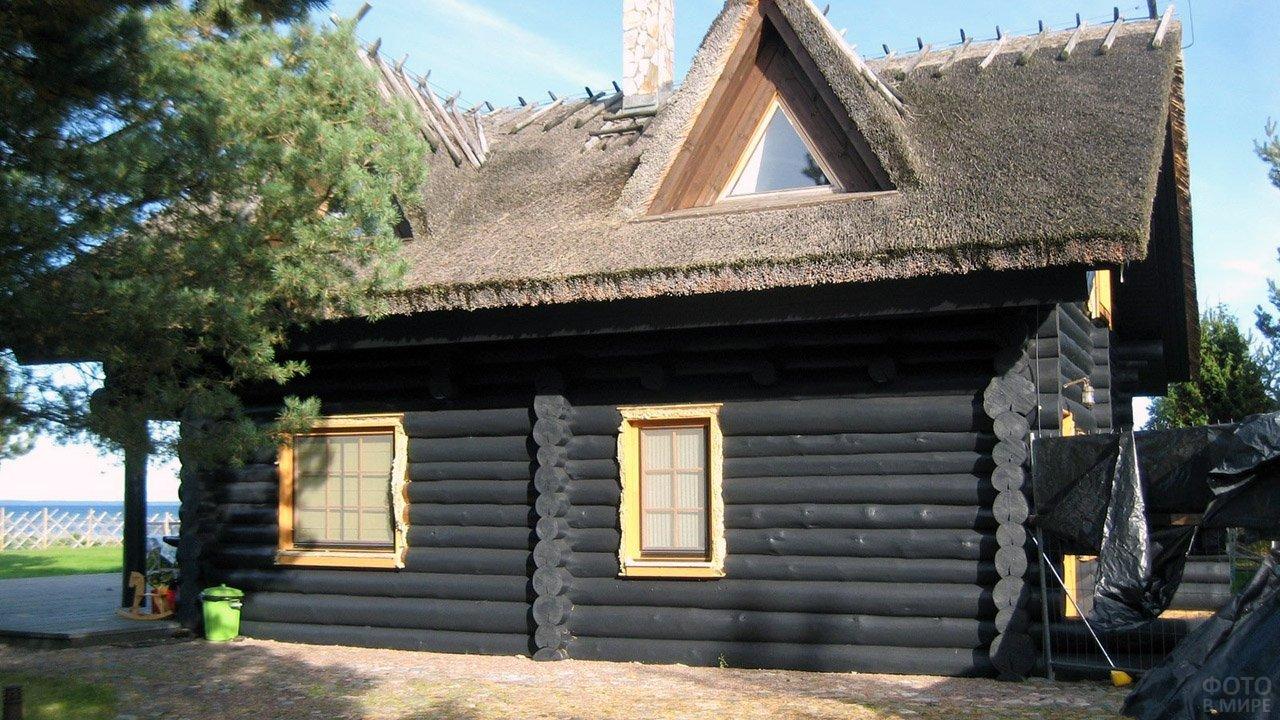Чёрный бревенчатый дом с соломенной крышей под сосной