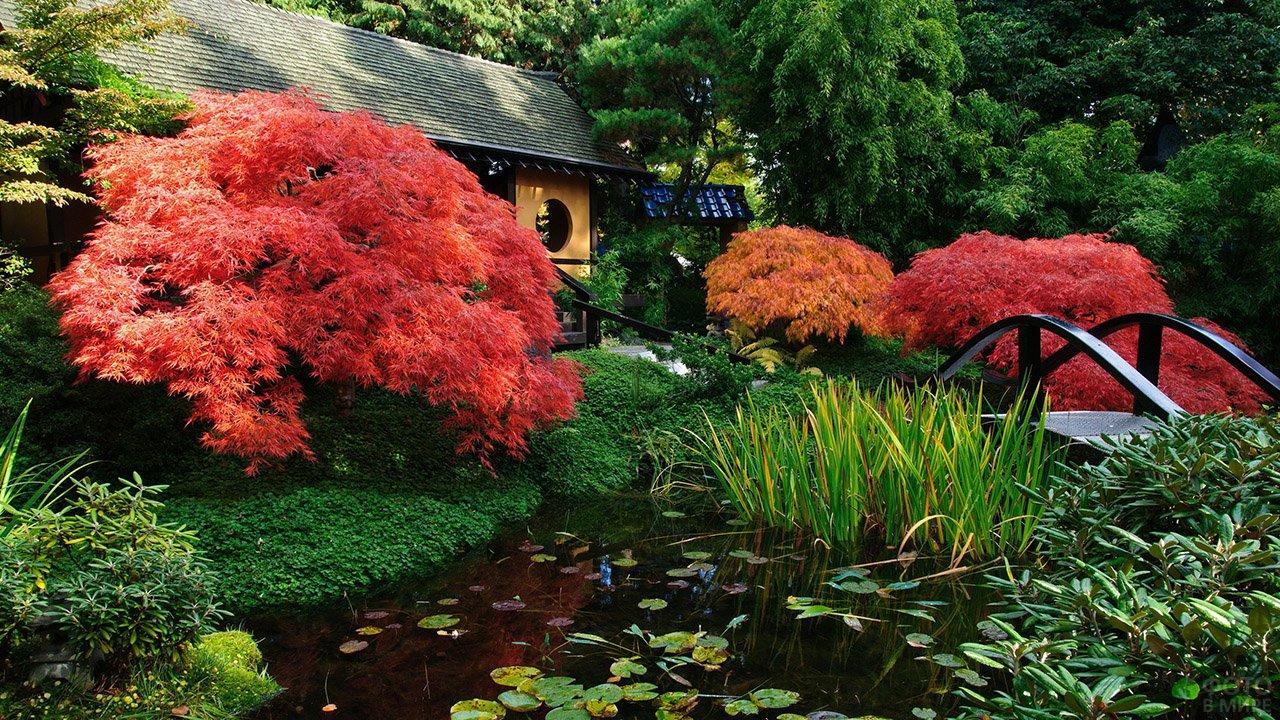 Цветущие кустарники вдоль фасада японского дома с мостиком через пруд