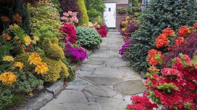 Дорожка к дому с бордюром из рододнедронов в английском саду