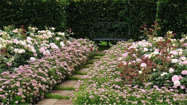Кованая садовая скамейка среди кустов японской спиреи