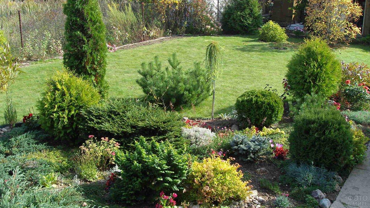Кусты туи вдоль садового газона