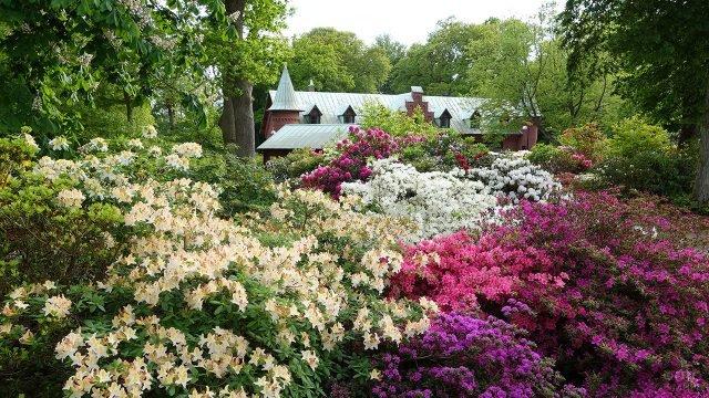 Пёстрые цветущие многолетние кустарники в саду шведской усадьбы
