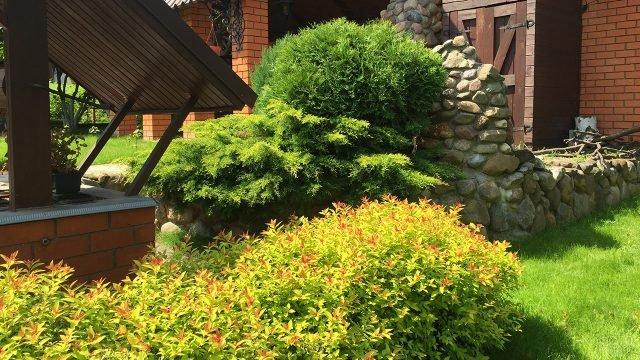 Спирея японская у каменной изгороди загородного дома