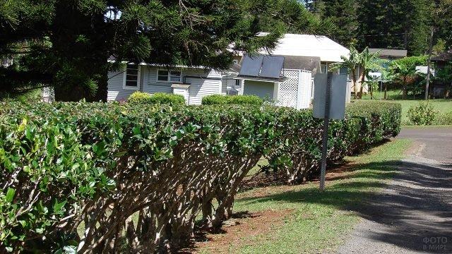 Живая изгородь из стриженных кустов бирючины