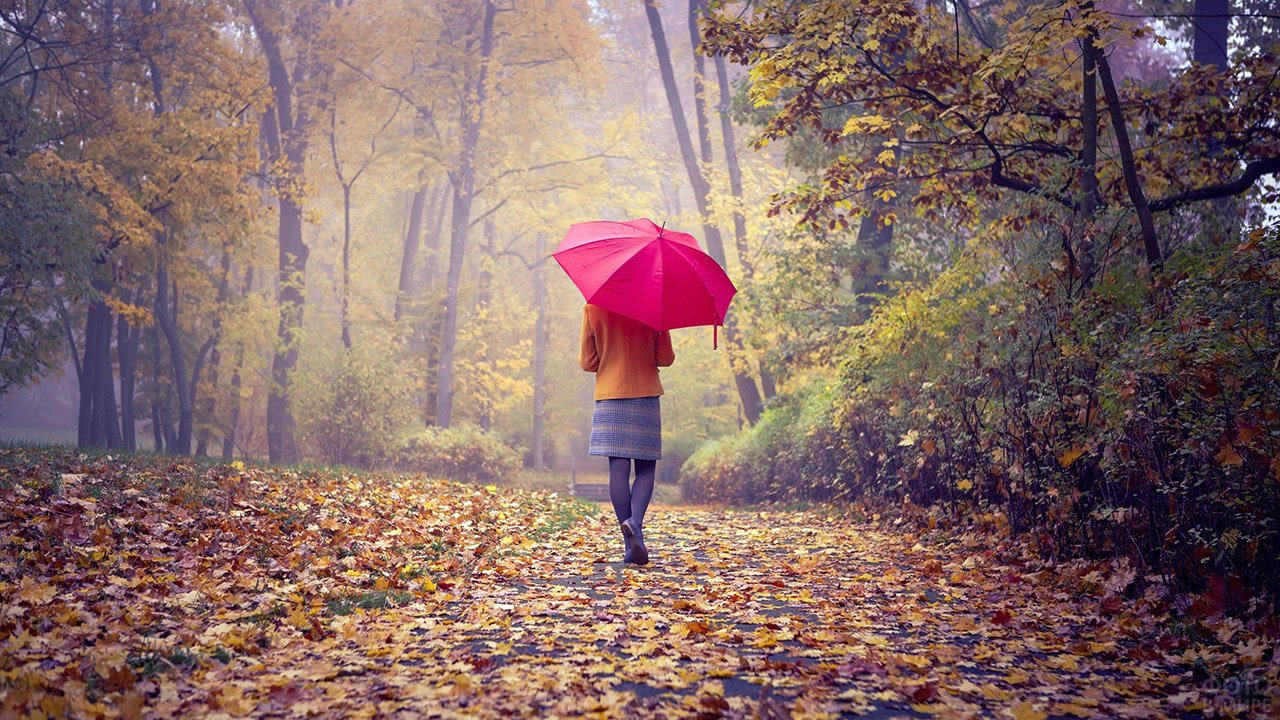 Девушка с красным зонтиком бредёт по золотистой аллее усыпанной листьями