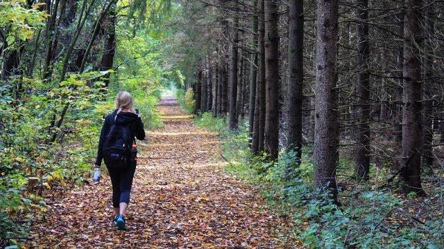 Туристка с рюкзаком и смартфоном идёт по осеннему лесу