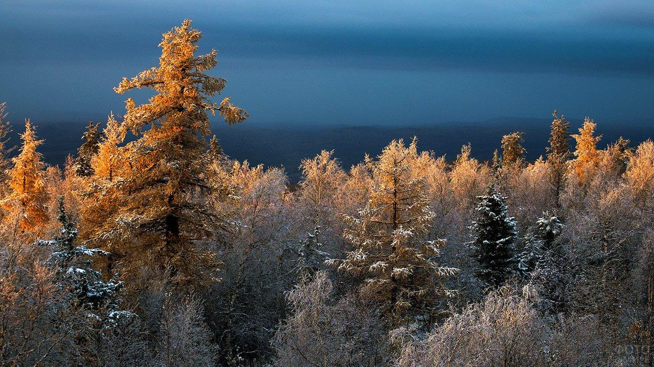 Осенние кроны деревьев в национальном парке Таганай