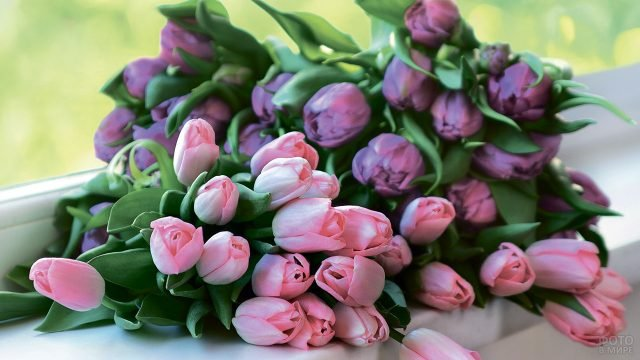 Два букета тюльпанов на подоконнике на фоне весенней зелени