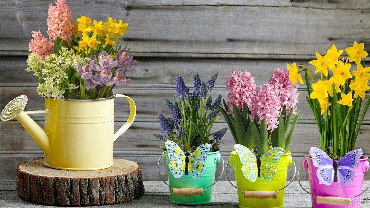 Весенние гиацинты, крокусы и нарциссы в нарядных ведёрках и лейке к 8 марта