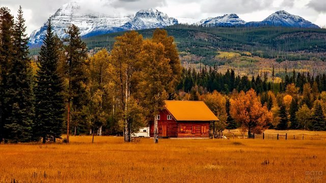 Деревянный дом в жёлтом поле под осенними берёзами на фоне гор