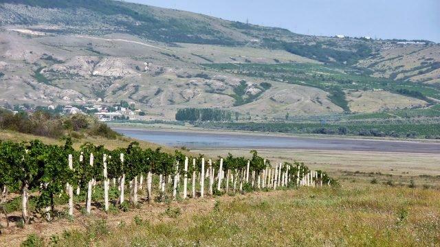 Виноградники крымского завода вин и коньяков Коктебель
