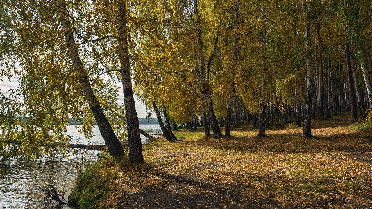 Берёзовая роща на берегу реки в осеннем парке