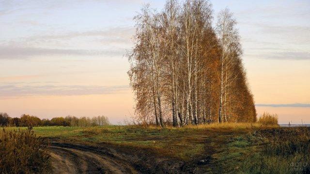 Берёзы у дороги в осеннем поле