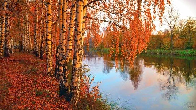 Осенние берёзы у лесной реки в лучах вечернего солнца
