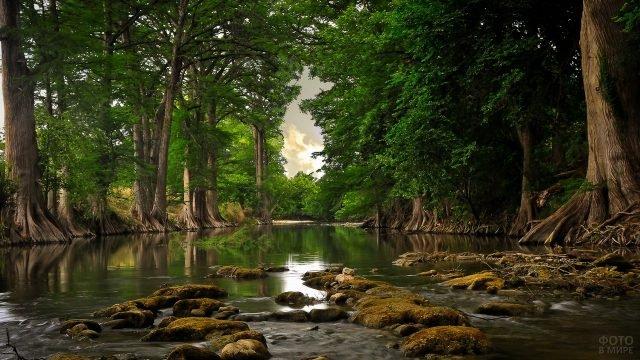 Большие деревья на берегу реки и камни в воде