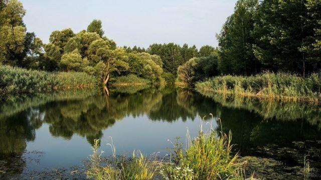 Гладь лесной реки