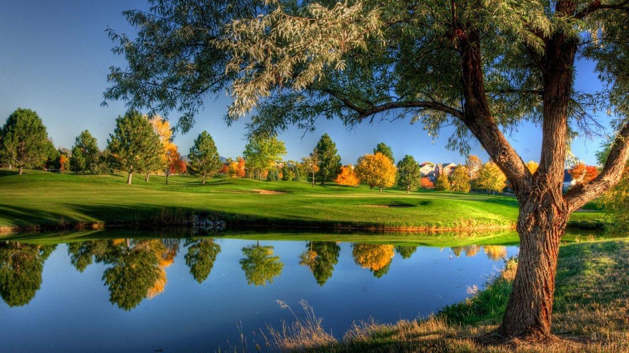 Ива на берегу реки осенью